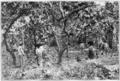 Fotg cocoa d035 gathering cacao in santa cruze trinidad.png