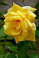 France-001840 - Smell the Roses (15089911783).jpg