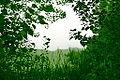 Free Green Nature Border Frame Creative Commons (4768791113).jpg