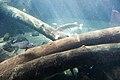 Freshwater fish (38776208440).jpg
