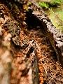 Fungus - Flickr - aspidoscelis.jpg