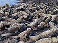 Galápagos Inseln, Ecuador (13921654665).jpg