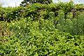 Garden border at Goodnestone Park Kent England 6.jpg