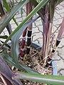 Gardenology.org-IMG 7578 qsbg11mar.jpg
