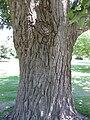 Gardenology.org-IMG 9604 rbgm10dec.jpg