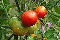 Gartenpflanzen 2012-09-01-0305.jpg