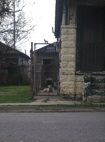 Pit Bulls in Gertown section of New Orleans