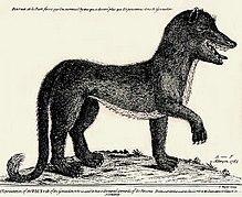 Protection du Loup dans LOUP 220px-Gevaudanwolf