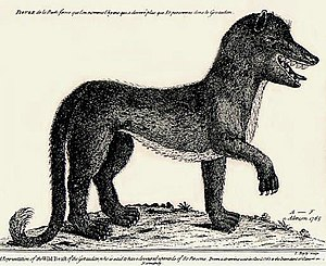 Antoine de Beauterne - Artist's conception of the Beast of Gévaudan, 18th-century engraving by A.F. of Alençon