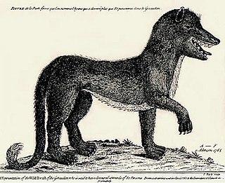Beast of Gévaudan