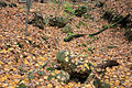 Gfp-wisconsin-blue-mounds-state-park-leaves-on-rocks.jpg