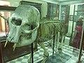 GharDalam-ElephantNain.JPG