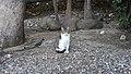 Gibraltar Cat (30DEC17) (5).jpg