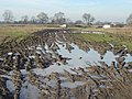 Glorious mud - geograph.org.uk - 687437.jpg