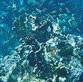Glover's Reef 2-15 (32518609103).jpg
