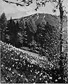 Golica v svojem pomladanskem plašču iz narcis 1927.jpg
