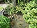Gouyne (affl Dordogne) D13 amont.jpg