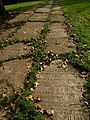 Gravestone path, Stoke Damerel churchyard - geograph.org.uk - 888114.jpg