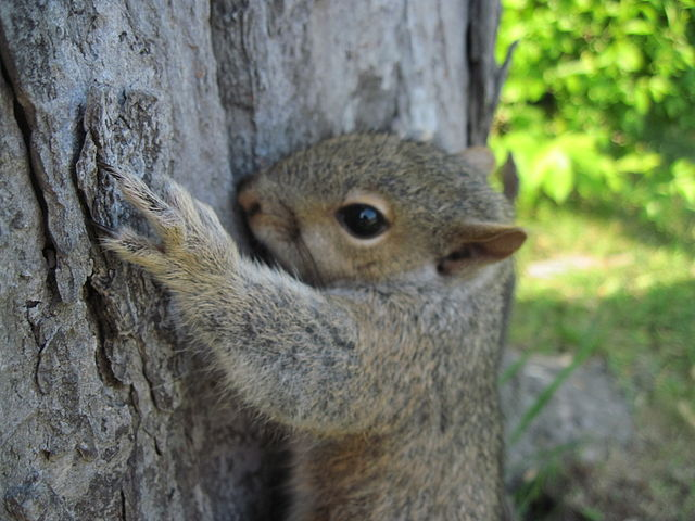short essay on squirrel This post explains the do's and don'ts of paraphrasing, and it includes 10 examples of paraphrasing to help your essay be smarter and better.