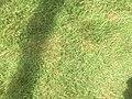 Green Grass 004.jpg