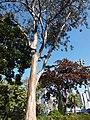 HK CWB 銅鑼灣 Causeway Bay 維多利亞公園 Victoria Park tree trunk n green leaves December 2019 SSG 21.jpg