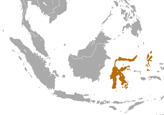 Halmahera naked-backed fruit bat species of mammal