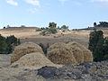 Hauts plateaux d'Ethiopie-Région Amhara (9).jpg