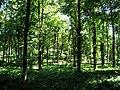 Hawhill Wood - geograph.org.uk - 26740.jpg