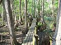 Highland Hammocks SP Swamp Trail07.jpg