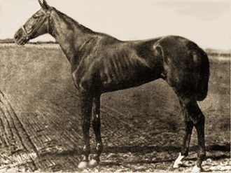 1881 Kentucky Derby - 1881 Kentucky Derby winner Hindoo