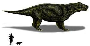 Tapinocephalus Assemblage Zone - Hipposaurus