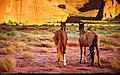 Horses (5951751919).jpg