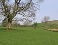 Horses in a field - geograph.org.uk - 418043.jpg