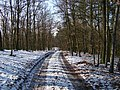 Housina, hřebenová cesta (01).jpg
