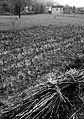 Huangshan, China (YELLOW MOUNTAIN-LANDSCAPE) XIV (1072914002).jpg