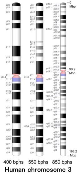 Chromosome 3 Wikipedia