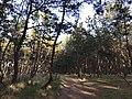 Imazu Pine Grove 12.jpg