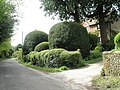 Impressive topiary at Yew Tree Cottage - geograph.org.uk - 788380.jpg