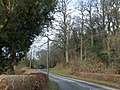 In Bury Wood (geograph 3333835).jpg