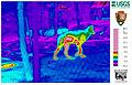 Infrared Wolves (12611657165).jpg
