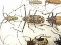 Insect Safari - beetle 11.jpg