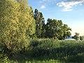 Insel Reichenau Image4.jpg