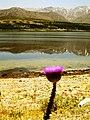Iran - Chaharmahal Bakhtiyari - Borujen - Choghakhor Lake - تالاب چغاخور - panoramio (1).jpg