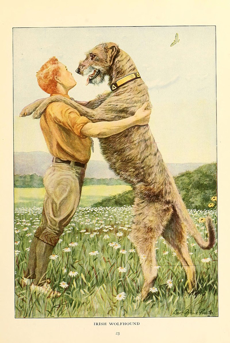 Gentle Giants: Dog Breeds That are More Friendlier Than They Look 4