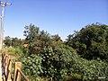 Itupeva - SP - panoramio (1090).jpg