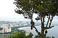 Jackfruit and the City... (314243477).jpg
