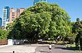Japanese Garden, Buenos Aires, Argentina, 15th. Jan 2011 - Flickr - PhillipC (2).jpg
