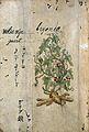 Japanese Herbal, 17th century Wellcome L0030053.jpg