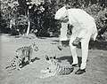 Jawaharlal Nehru with Tiger cubs at Teen Murti House.jpg