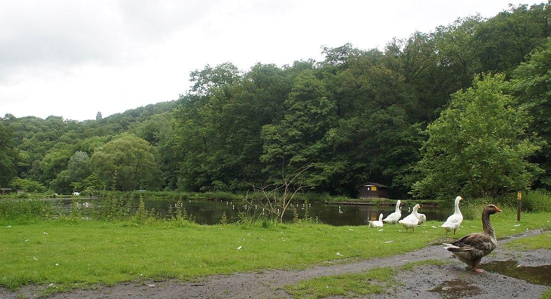 Visé (Argenteau),  Belgium: Pond on the  Julienne in the Julienne Park